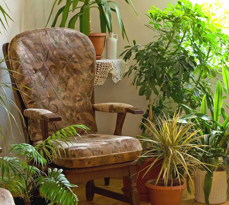 5 Air-Filtering Plants That You Need In Your Home Right Now