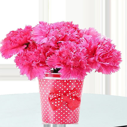 Carnation flowers uses and health benefits