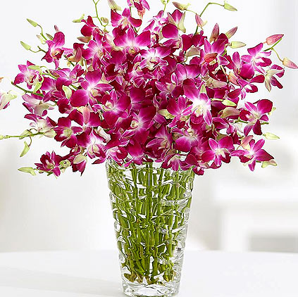 Uses of Orchid flowers and its health benefits
