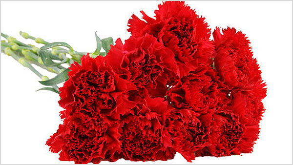 Know About The Carnations Meaning According To Their Color