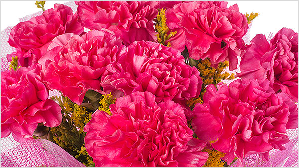 Pink Carnation - What pink carnations stands for