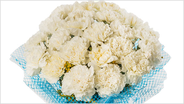 White Carnation - What pink carnations symbolize