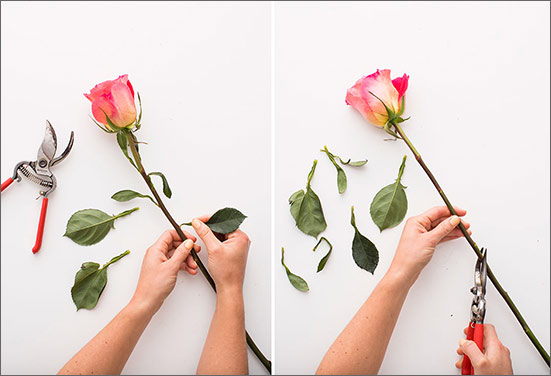 cut flowers long lasting tips