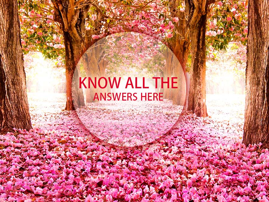 Get Answer To All Your Flower Related Querries