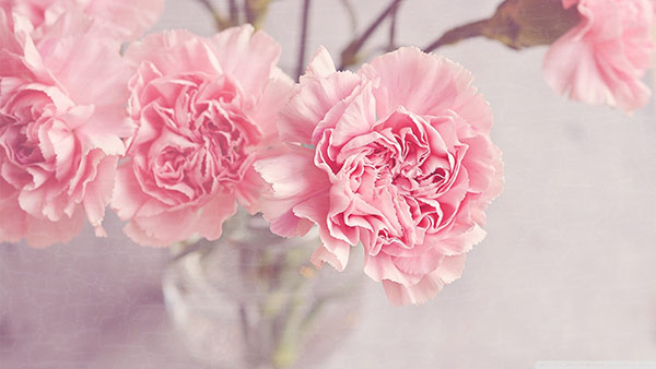 What carnation personifies about you