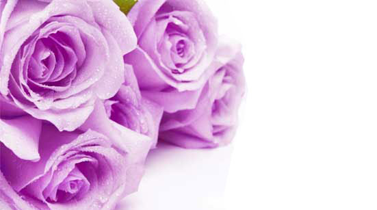 7 Stages of Love with Roses – Stage 5 – Conviction – Purple Roses