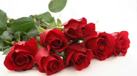 7 Stages of Love with Roses – Stage  - You Are Ready to Love – Red Roses