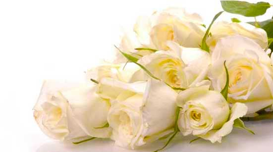 7 Stages of Love with Roses – Stage 2 – Infatuation – White Roses