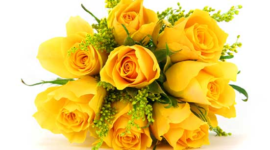 7 Stages of Love with Roses – Stage 1 – Appreciation – Yellow Roses