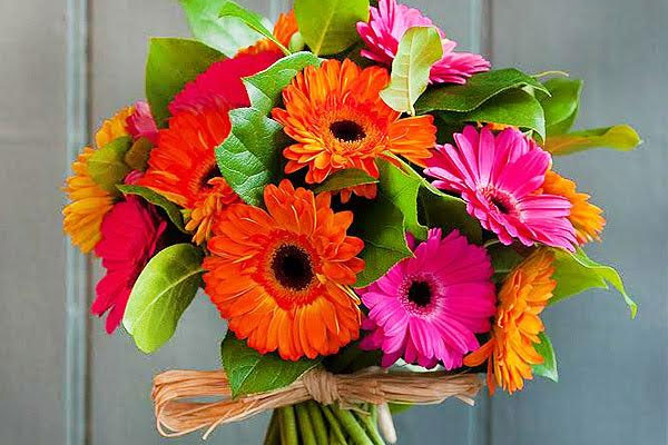 A bouquet of colorful gerberas as a perfect gift for men