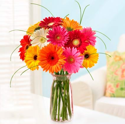 Gerbera flower is for highly dignified mothers