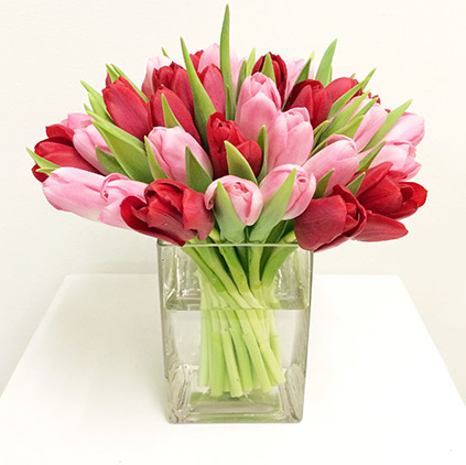 Tulip flower is for sweet and gentle mothers