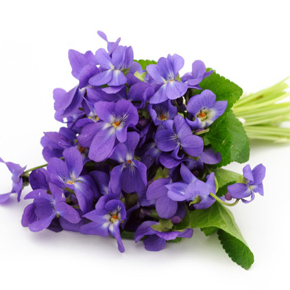 Violet flower is for sacrifices doing mothers