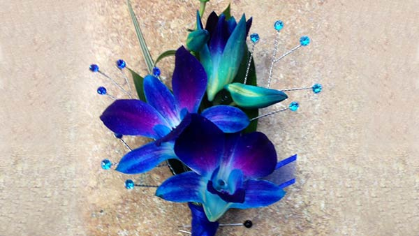Meaning of Blue Orchid Flower