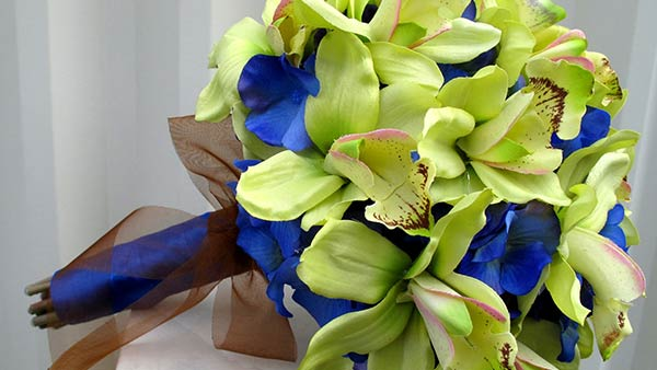 Meaning of Green Color Orchid Flower