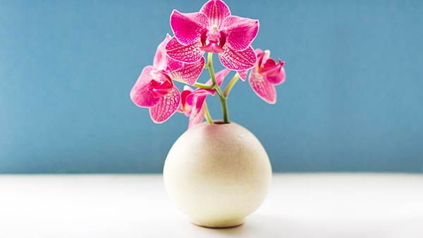 Pink Orchid Flowers - What Does They Stand For