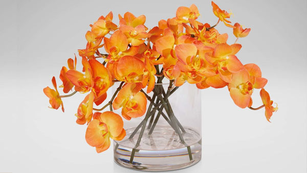 Orange Orchids - What Does They Depict