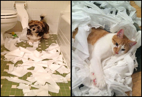 Dog and Cat messing with Toilet Paper
