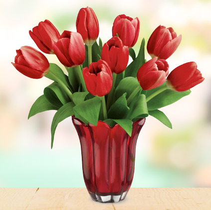 Tulip flowers and sentiments behind gifting them