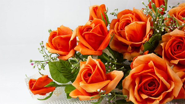 What Orange color of rose means