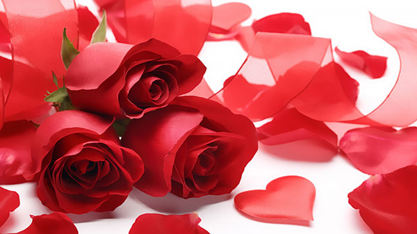 What Red color of rose means