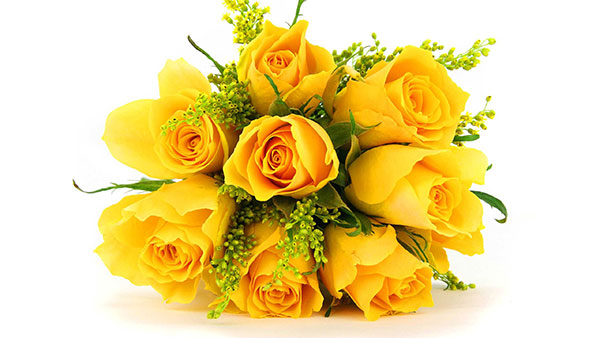 What Yellow color of rose means