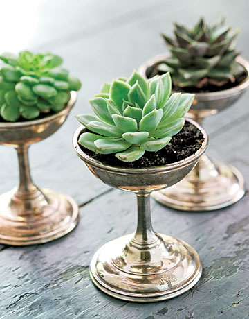 Succulent Plants in Vintage Ice Cream Dishes