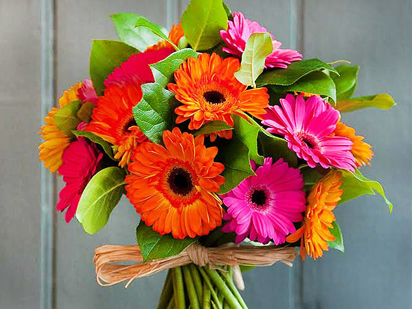Gerberas flowers for your sister