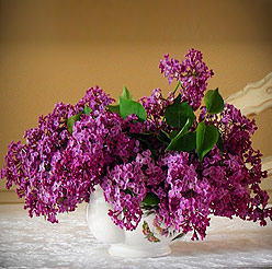 Bouquet of Lilac flowers - Perfect flower for Zodiac sign Pisces