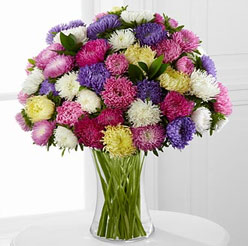 Bouquet of Aster flowers - Perfect flower for Zodiac sign Libra