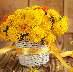 Bouquet of  yellow Chrysanthemum - Perfect flower for Zodiac sign Scorpio