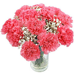 Bouquet of pink Carnation - Perfect flower for Zodiac sign Sagittarius